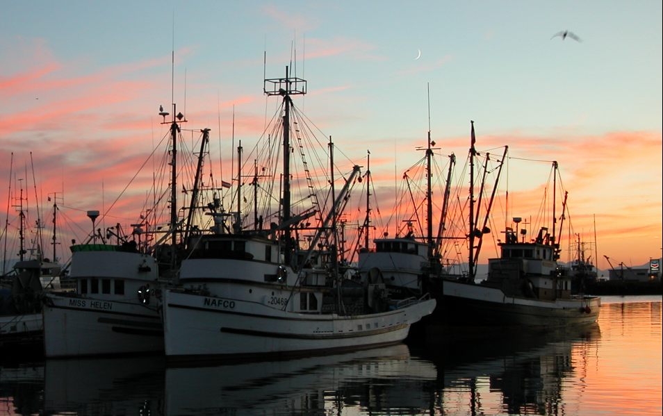 INNOVATIVE INVESTMENTS SECTOR OF FISHERY AND AQUACULTURE